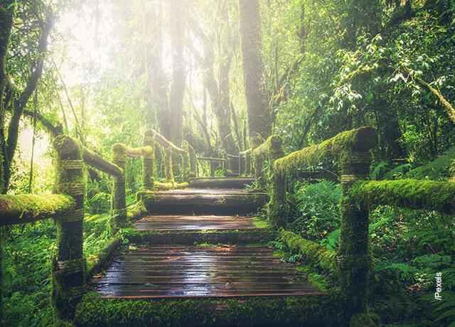 Foto de unas escaleras cubiertas por árboles