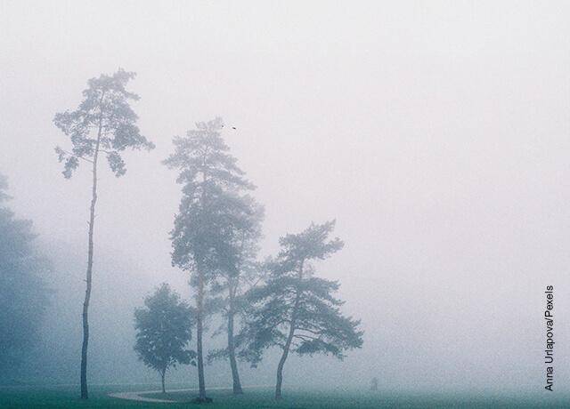 Foto de unos árboles en medio de la niebla