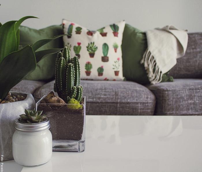 Foto de una sala decorada con cactus