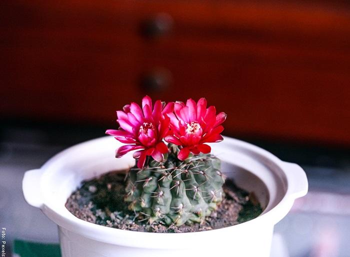 Foto de una hermosa planta con una flor