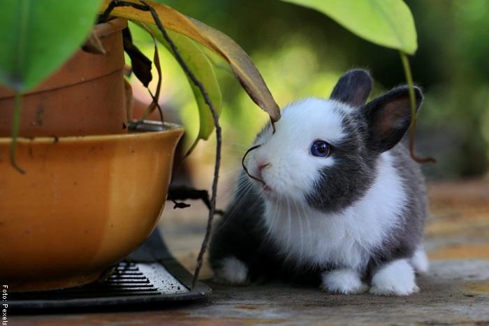 Foto de un conejo al lado de una planta