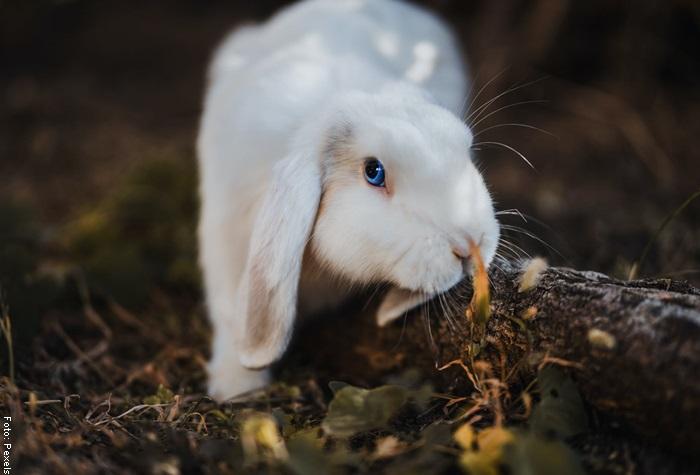 Foto de un conejo blanco
