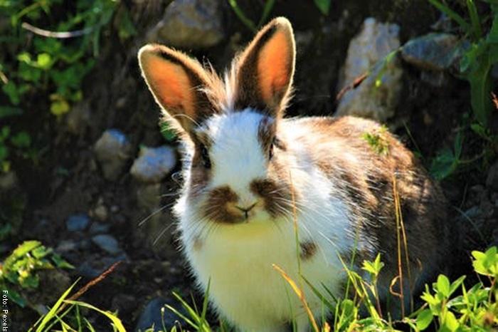 Foto de un conejo en el bosque