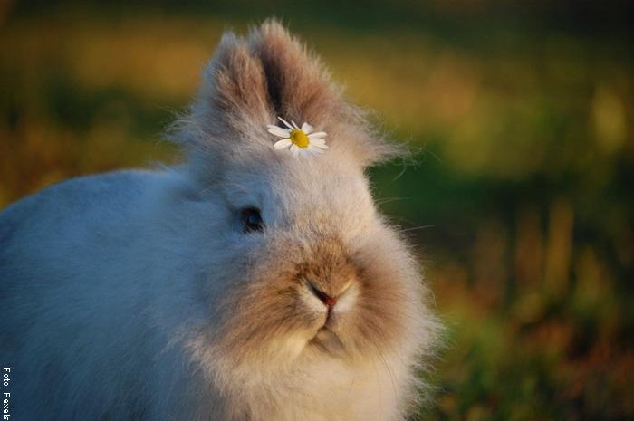 Foto de una coneja con una flor en la cabeza