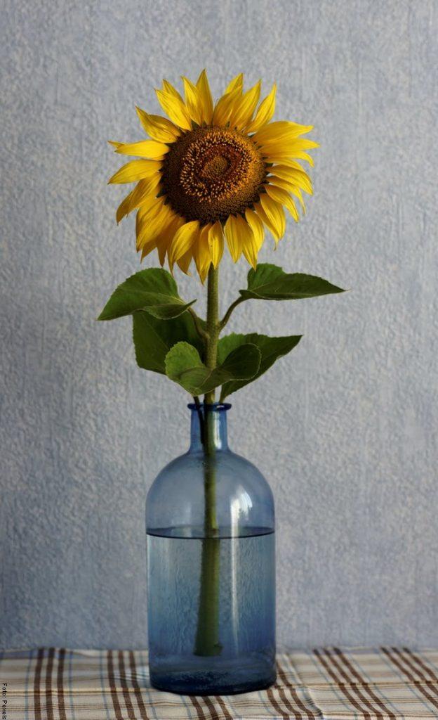 Foto de un girasol en un florero