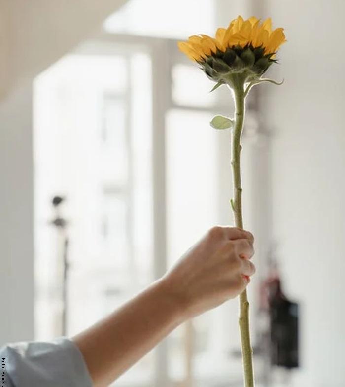 Foto de una mujer sosteniendo un girasol para ilustrar cómo cuidar un girasol