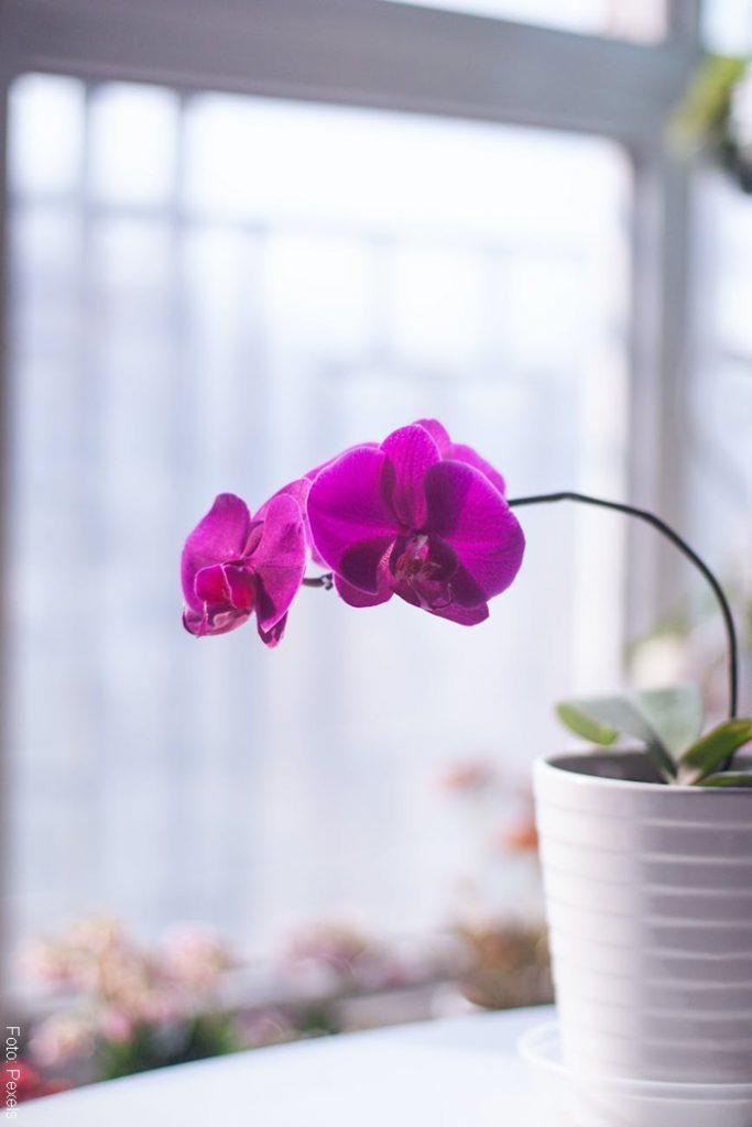 Foto de una planta frente a una ventana para ilustrar cómo cuidar una orquídea