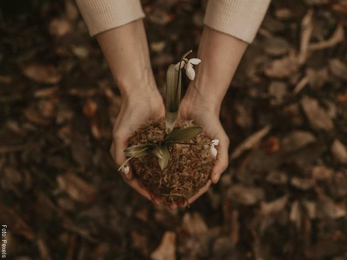 Foto de una mujer sosteniendo tierra en las manos para ilustrar cómo cuidar una orquídea
