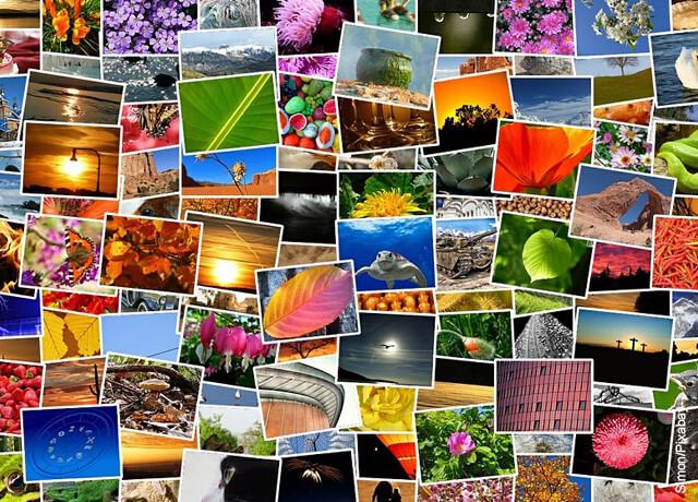 Foto de collage con animales y lugares que muestra cómo hacer un collage