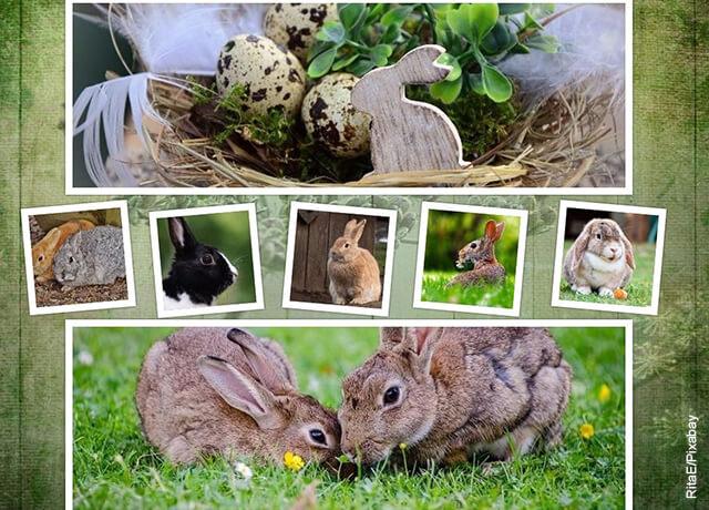 Foto de un collage de conejos