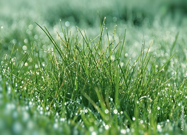 Foto del pasto mojado