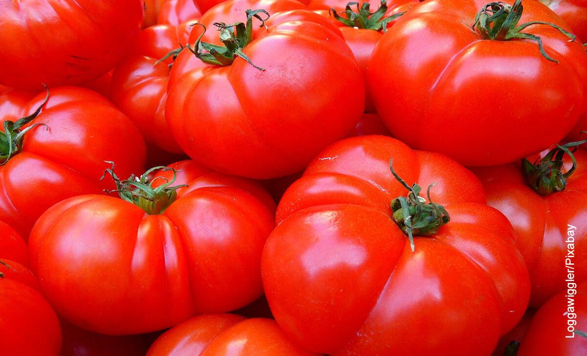 Fotos de muchos tomates rojos