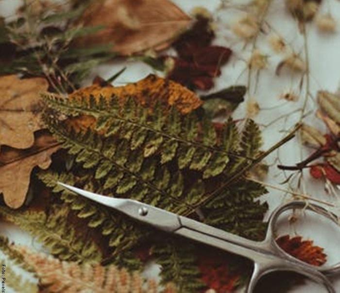 Foto de unas ramas y unas tijeras para ilustrar helechos y sus cuidados