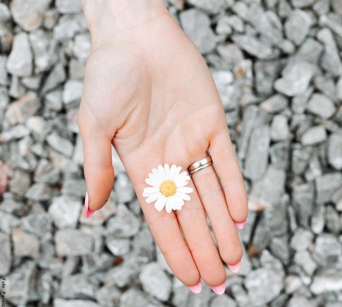 Foto de una flor de manzanilla