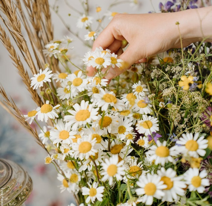 Foto de una mano con flores de manzanilla