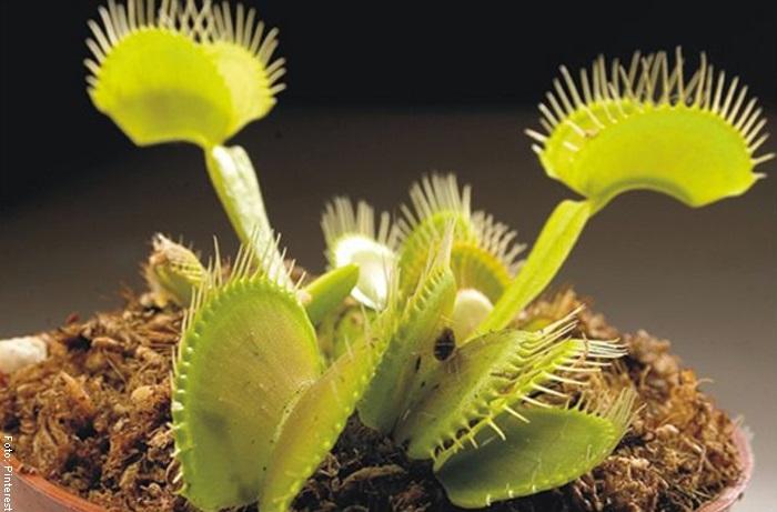 Foto para ilustrar plantas carnívoras cuidados