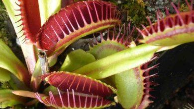 Plantas carnívoras, cuidados que debes conocer