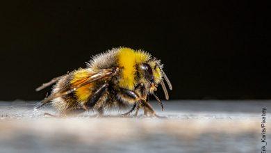 Foto de una abeja sobre una superficie