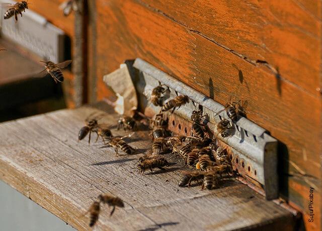 Foto de abejas en una puerta que muestra qué significa soñar con abejas