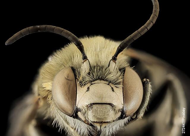 Foto de la cara de una abeja