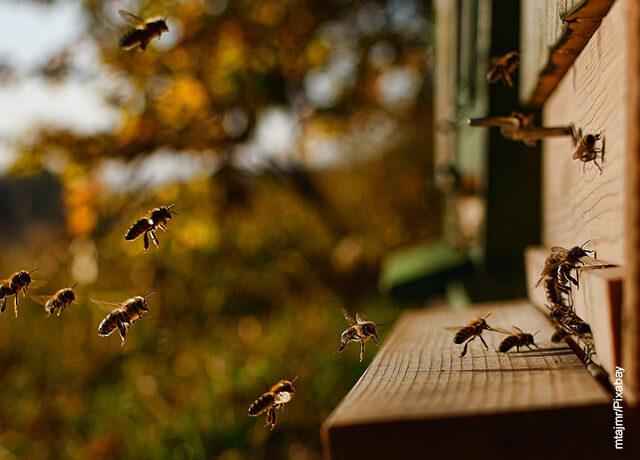 Foto de abejas volando