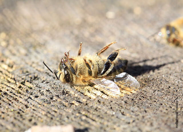 Foto de una abeja muerta en una vía