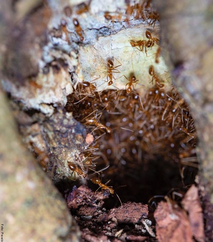 Foto de un nido de hormigas
