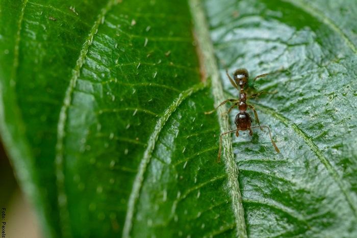 Foto de una hormiga pequeña