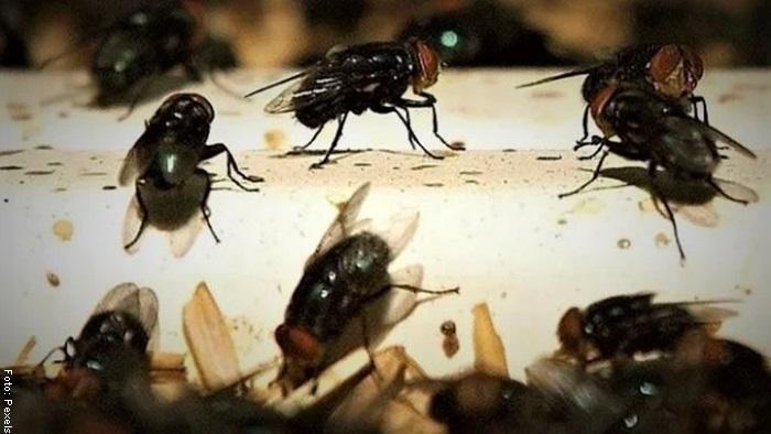 Foto de insectos para ilustrar qué significa soñar con moscas