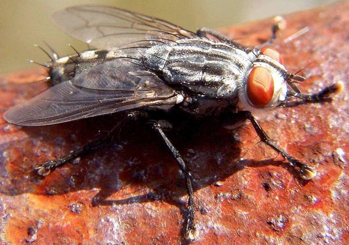 Foto de una mosca grande
