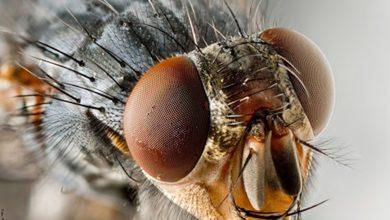 ¿Qué significa soñar con moscas? No te lo esperabas
