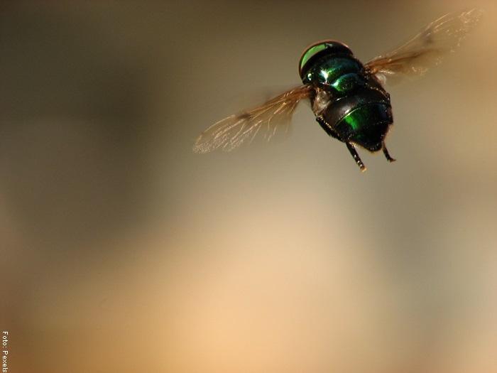 Foto de una mosca volando