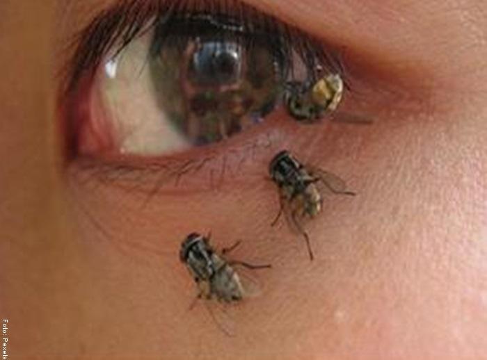 Fotos de unas moscas sobre el ojo de una mujer