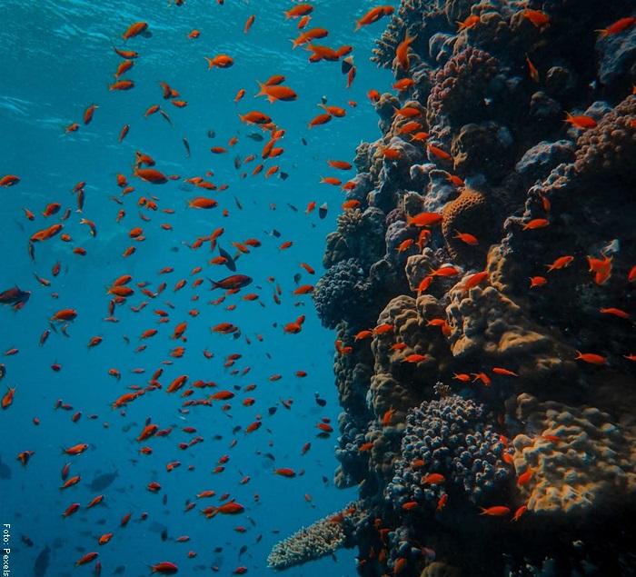 Foto de varios peces en el mar