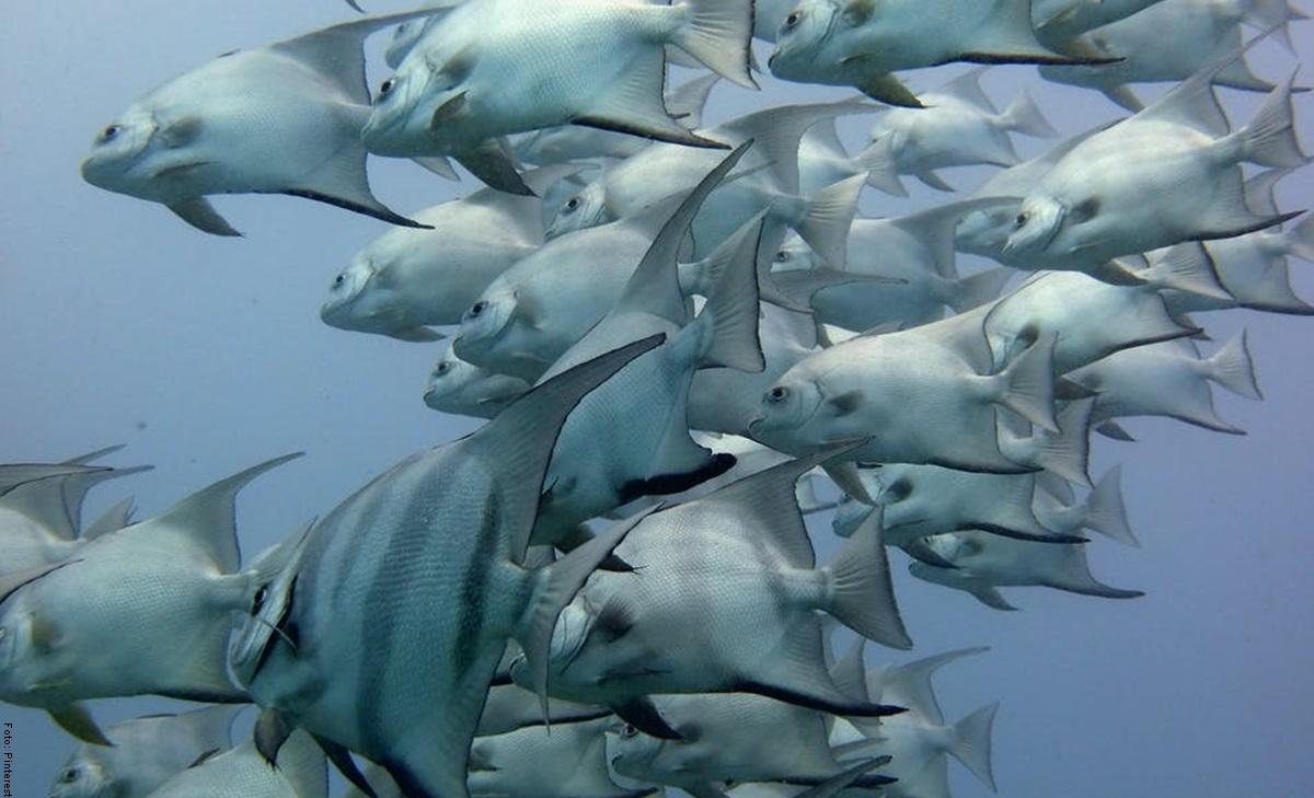 Qué significa soñar con pescados, ¡buena suerte!