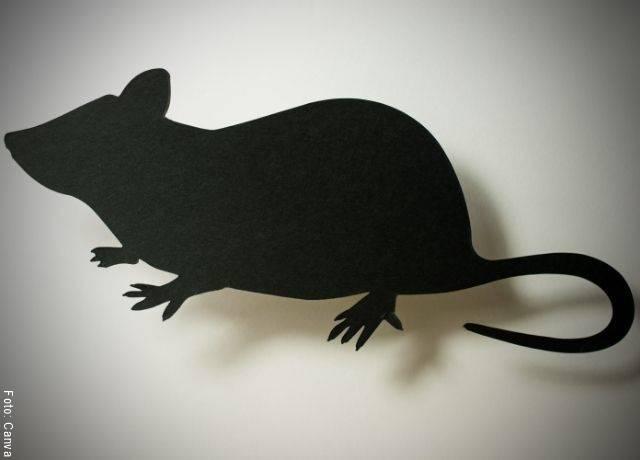 Foto de la silueta de un roedor