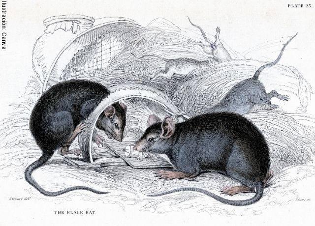 Ilustración que muestra a varios roedores