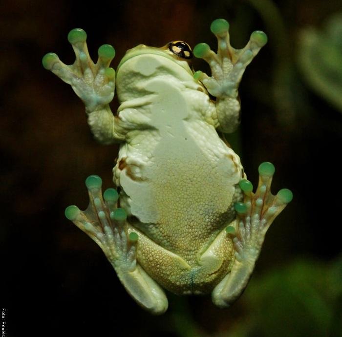 Foto de una rana por debajo