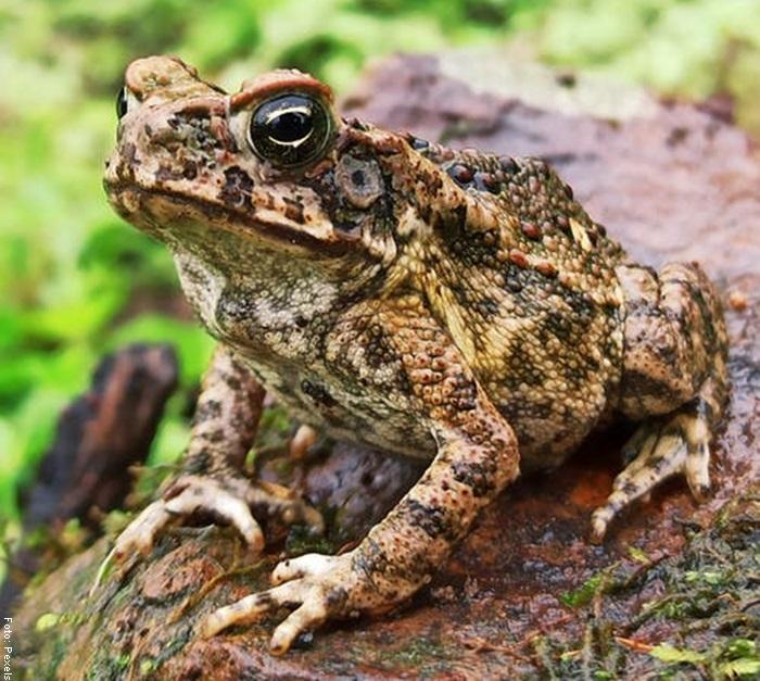 Foto de una rana en una piedra