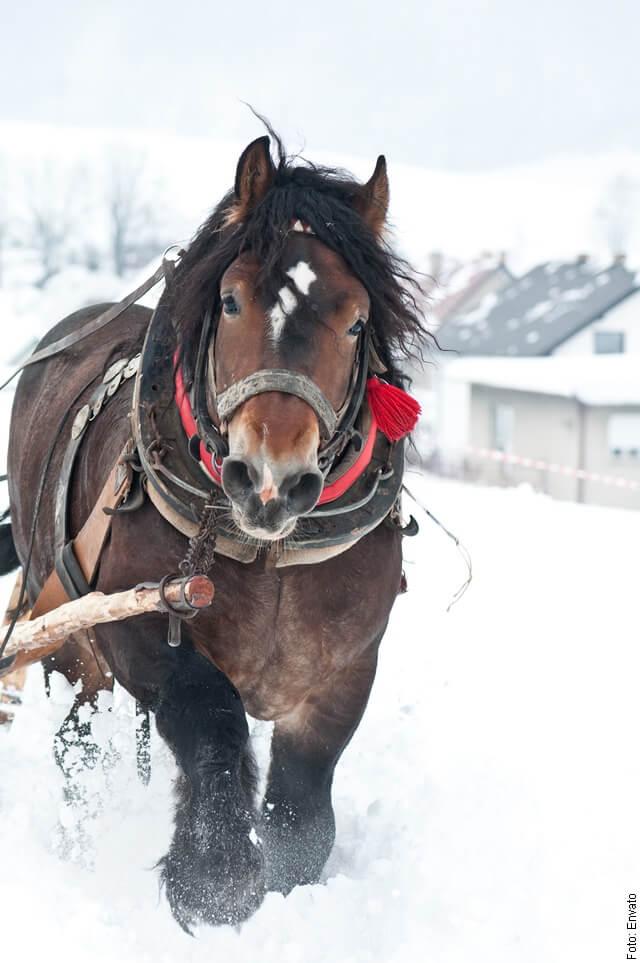 foto de caballo grande