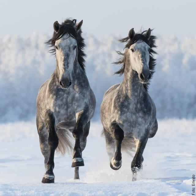 foto de dos caballos corriendo