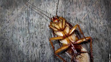Soñar con cucarachas: ¿Cuál es su significado?