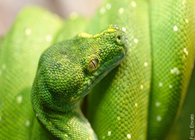 Foto de serpiente verde