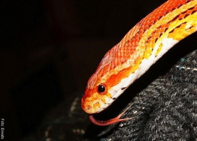 Foto de culebra de colores