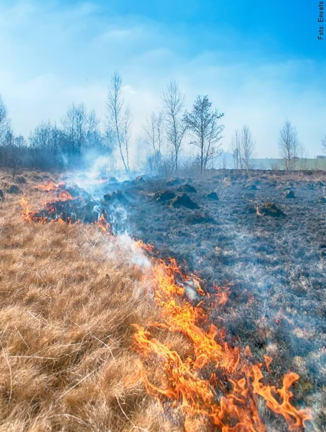 foto de paisaje quemado por el fuego