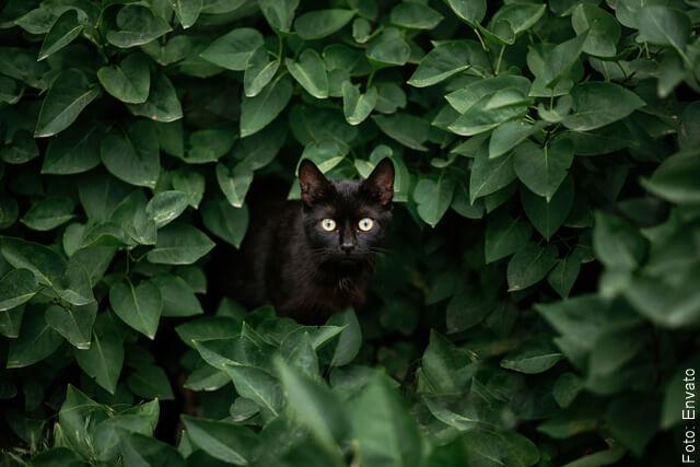 foto de gato negro en medio de vegetación