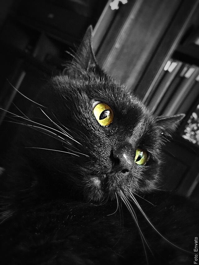 foto de gato negro mirando