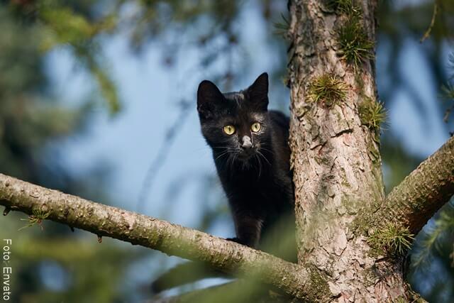 foto dep gato negro en el arbol