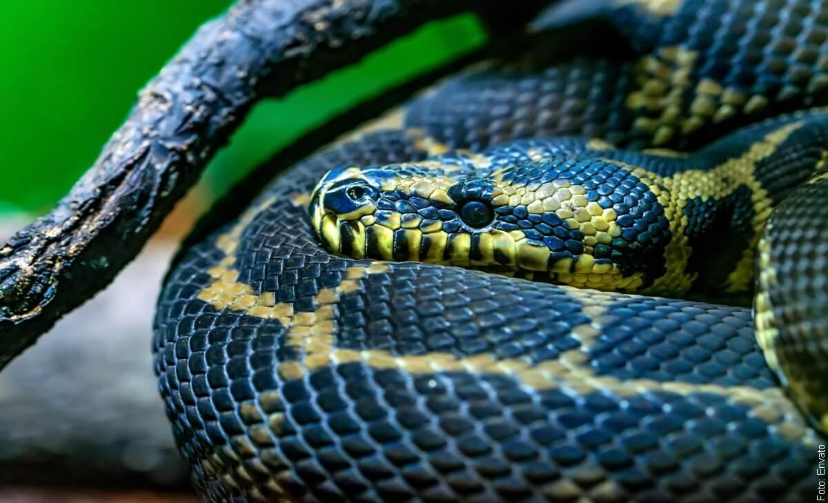 Soñar con serpientes ¡Te sorprenderás!