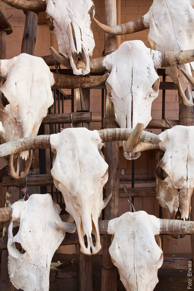 foto de huesos de vacas muertas